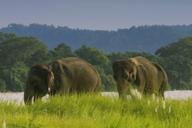 Chitwan 3 Nights 4 Days